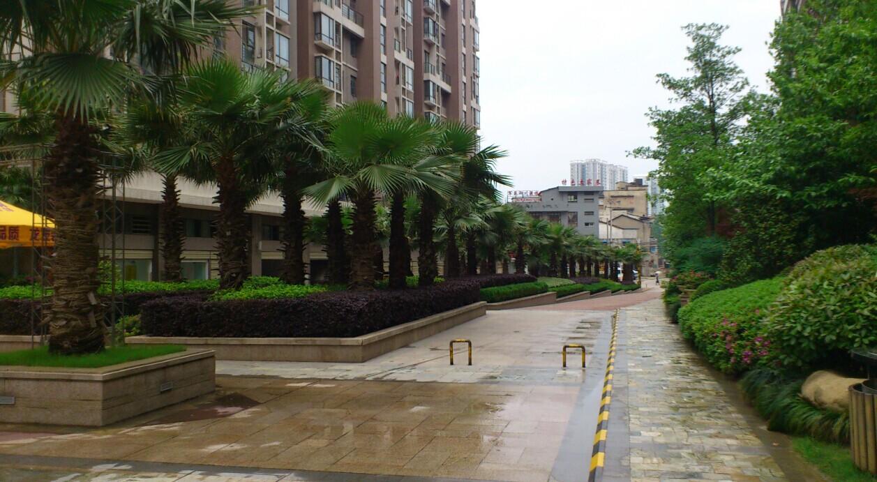 校园绿化设计