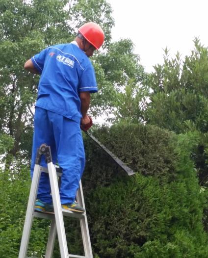园林苗木养护