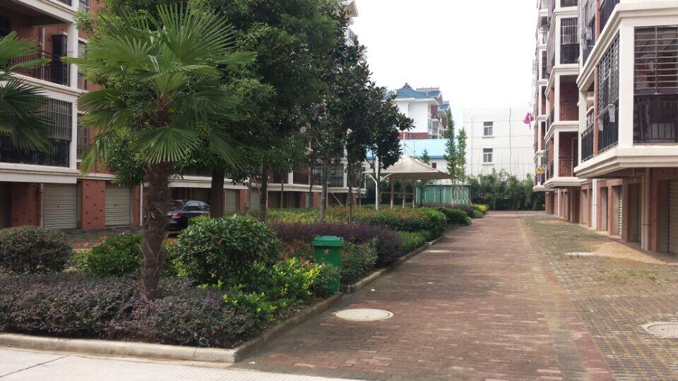 绿化景观养护