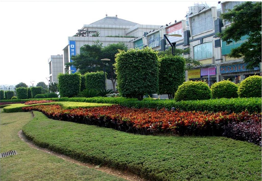 武漢綠化養護