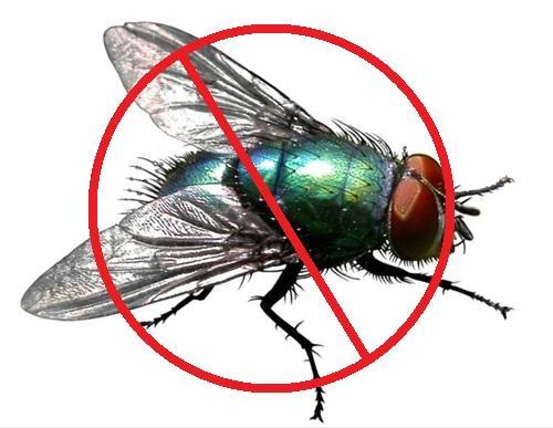 贵阳专业灭苍蝇