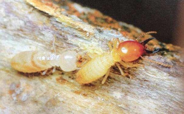 贵州专业灭蚁