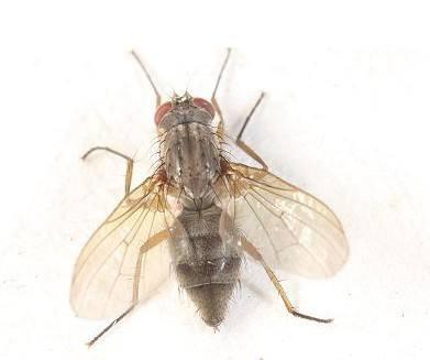 贵州灭苍蝇公司