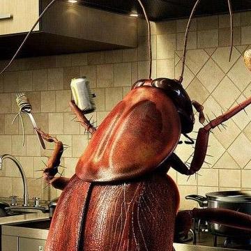 家庭灭蟑螂