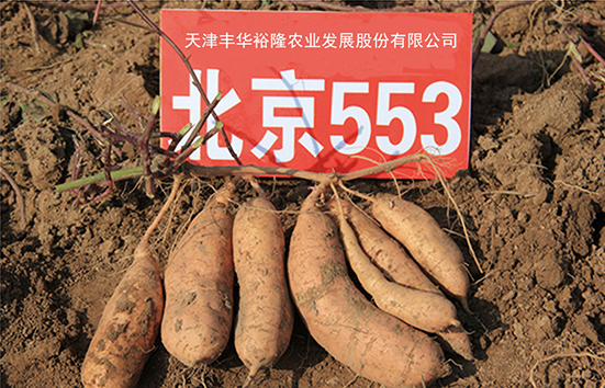 北京553