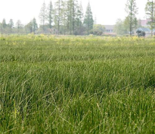 四川水生植物批发市场