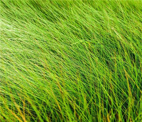 四川水生植物批发价格