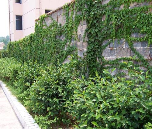 绿植租赁厂家