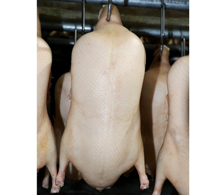 烤鸭专用鸭坯厂家