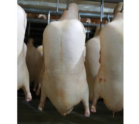烤鸭专用鸭坯生产厂家