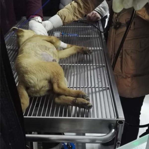 宠物手术台