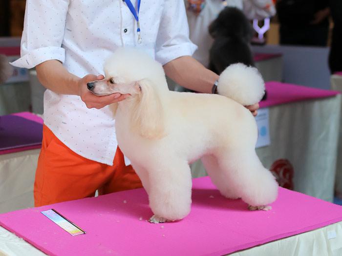 宠物护理培训