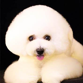 哈尔滨宠物美容师