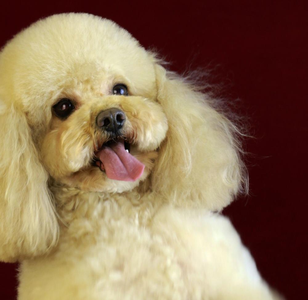 宠物美容美发