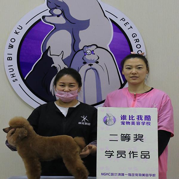 哈尔滨宠物美容培训地址