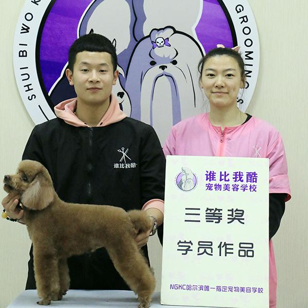 哈尔滨宠物美容培训学校