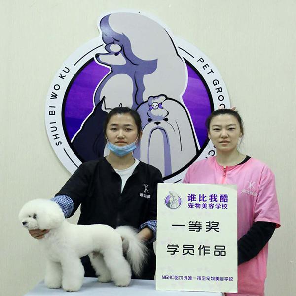 哈尔滨宠物学校哪家好