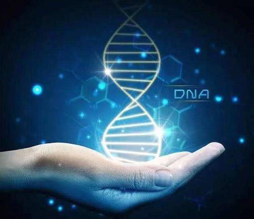 儿童天赋基因