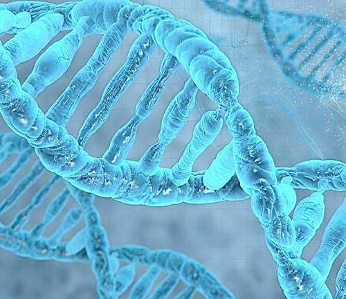 贵州DNA司法鉴定