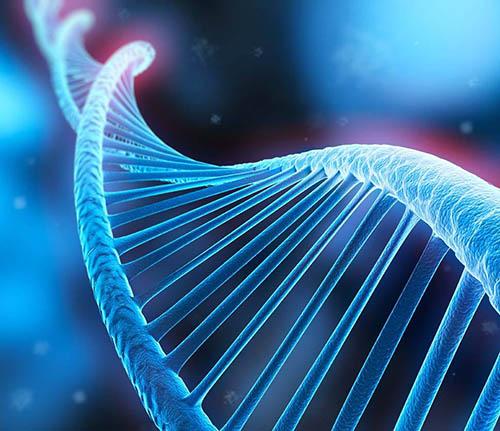 DNA司法鉴定