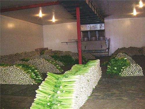 蔬菜冷库造价