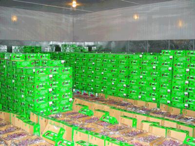 水果冷库公司