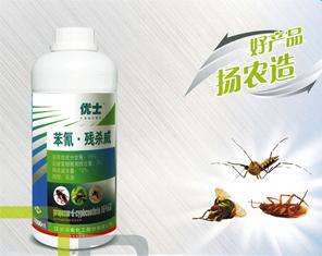 家庭灭蟑螂家庭怎么诱捕 消灭蟑螂的小妙招