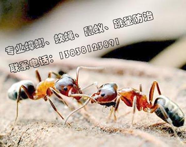 【图解】郑州杀虫公司 怎么杀灭蟑螂