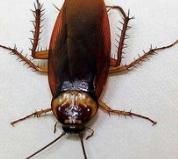 杀蟑螂方法