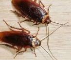 杀蟑螂公司