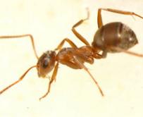 家庭灭蚂蚁
