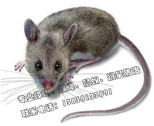 4个灭鼠方法