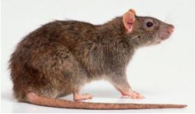 超市杀虫灭鼠