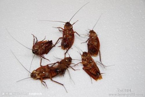 灭蟑螂方法