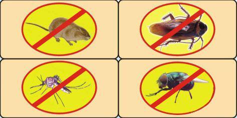 夏天灭蚊蝇