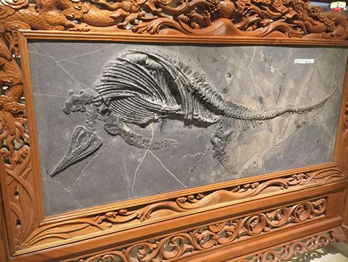 贵阳古生物化石装裱