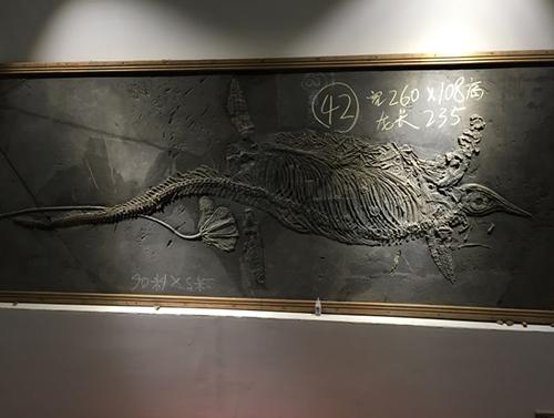 贵阳鱼龙化石