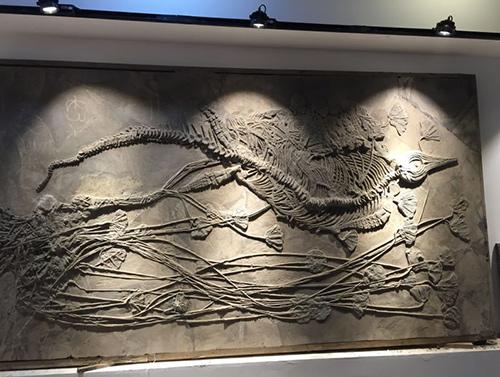 贵州鱼龙化石展示馆