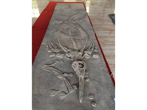 贵州鱼化石