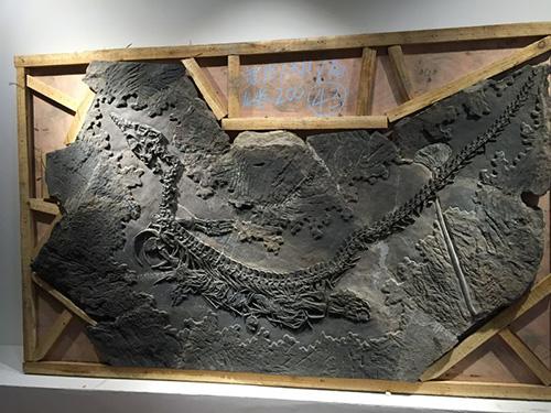 贵州虾化石