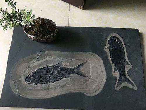 贵州关岭鱼化石