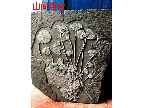 贵州海百合化石收藏
