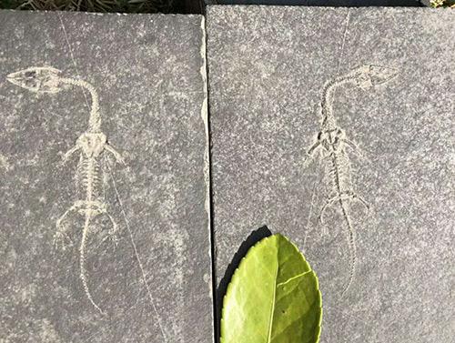 贵州龙化石展示馆