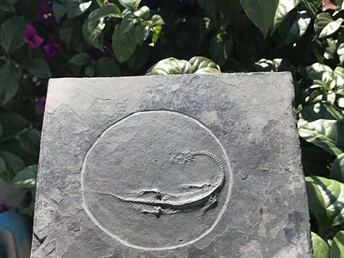 贵州关岭化石研究价值