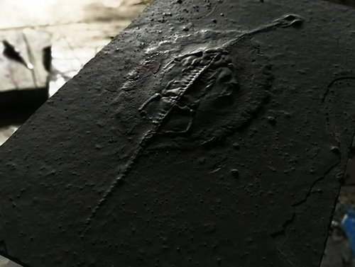 胡氏贵州关岭化石