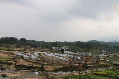 白芨种植基地