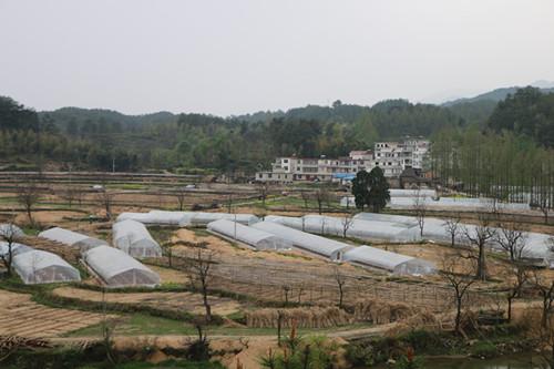 白芨种苗栽培基地
