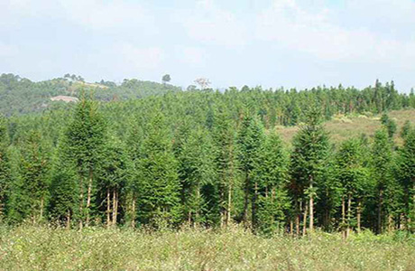 经济林种植