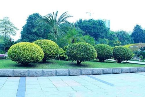 贵阳小区绿化