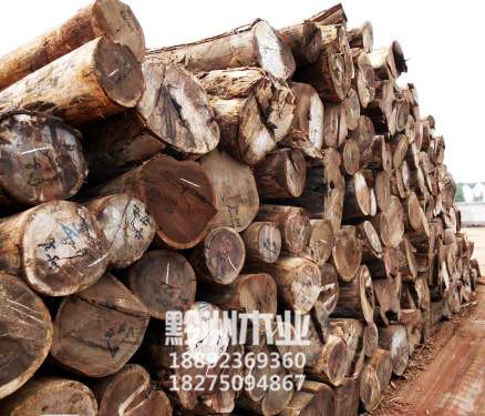 进口原木批发